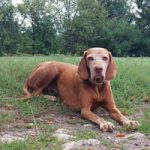 Lilly 11 Jahre